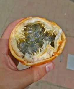 Passion Fruit Granadilla Ecuador