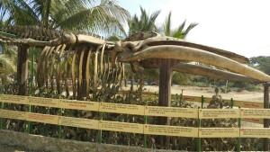 Whale Bones Puerto Lopez Ecuador