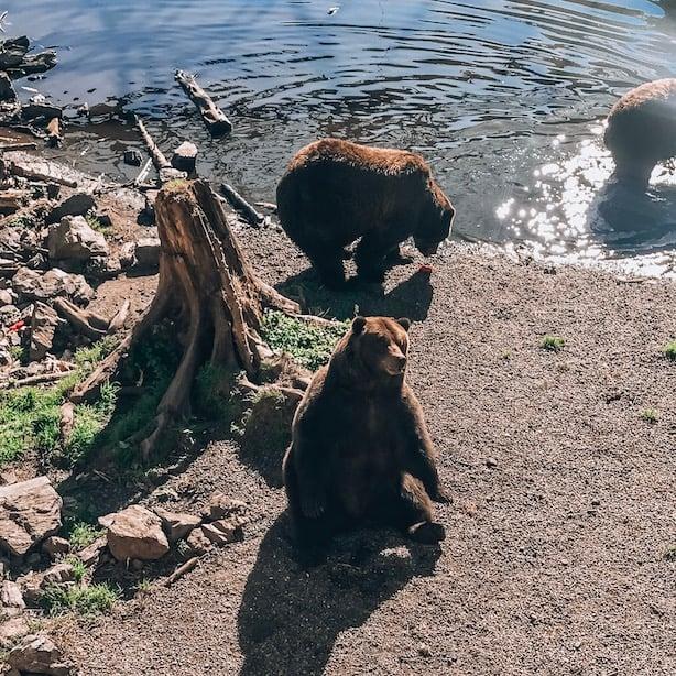 Bear sanctuary in Sitka