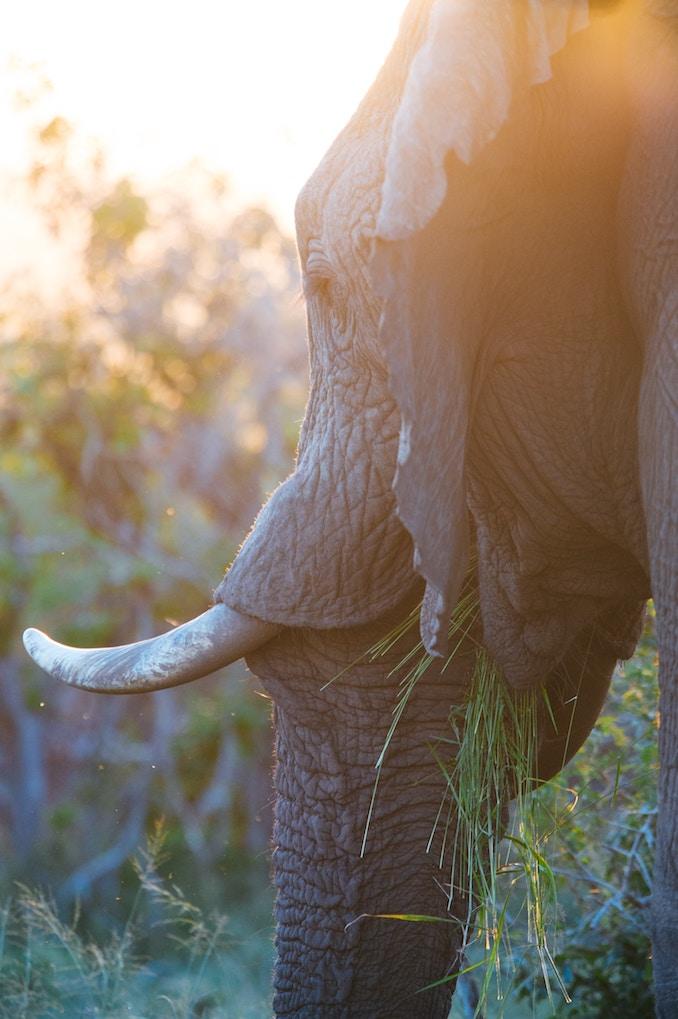 elephant abuse awareness - stop elephant rides