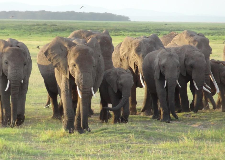see elephants on an african safari