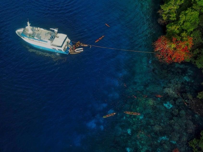 Solomon Islands Mane
