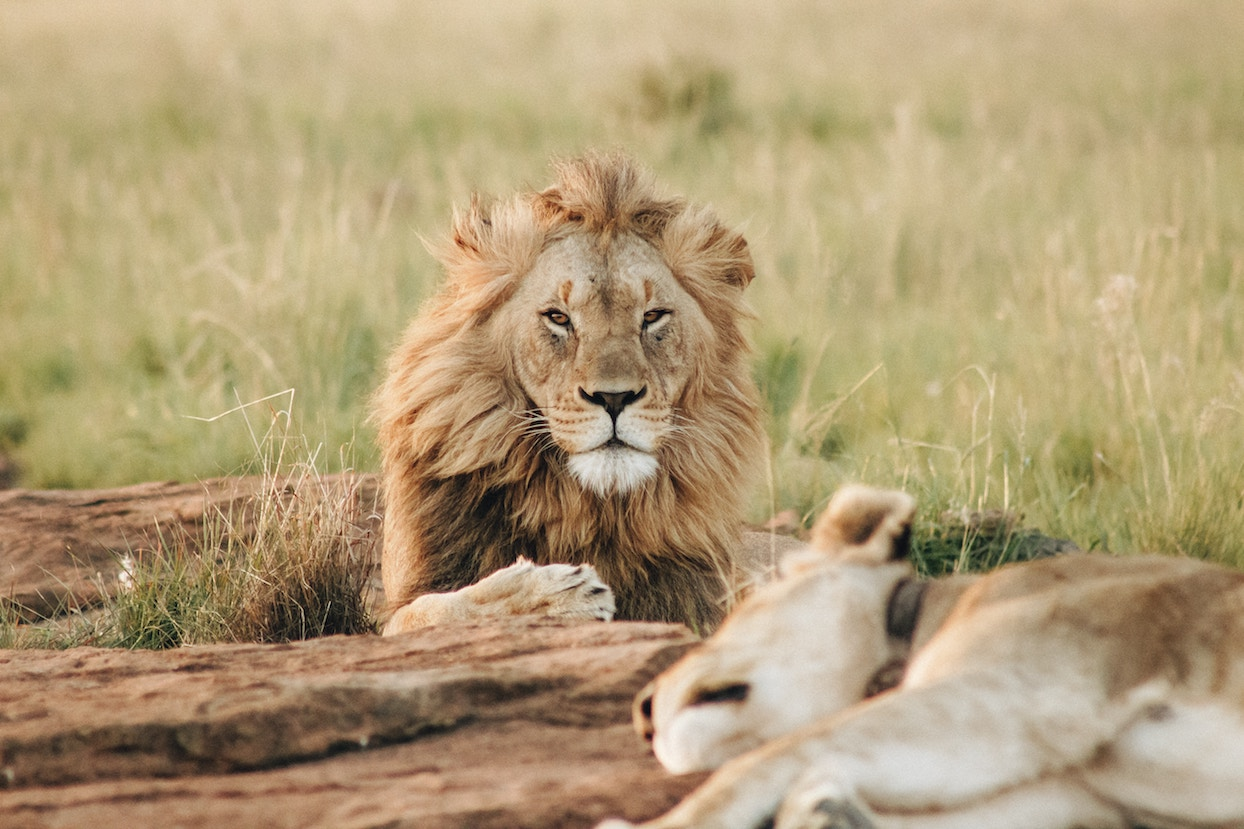 5 alternatives to the classic African safari
