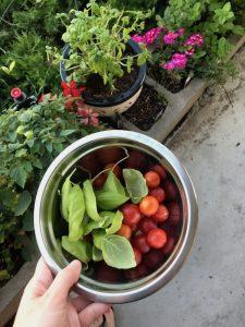 Veggies from our garden - rv living