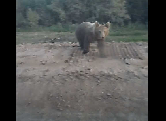 Bear Approaches Car
