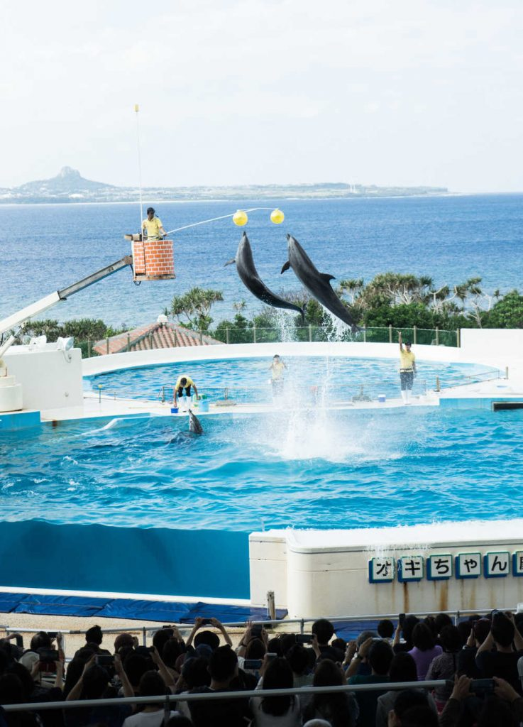 Dolphins Performing for audience