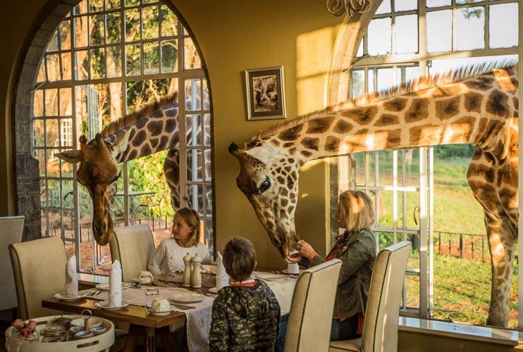 most unique hotels in the world - giraffe manor