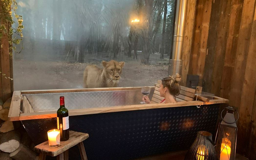 Port Lympne Hotel and Reserve in Kent First Hotel In The World That Lets You Sleep With Lions
