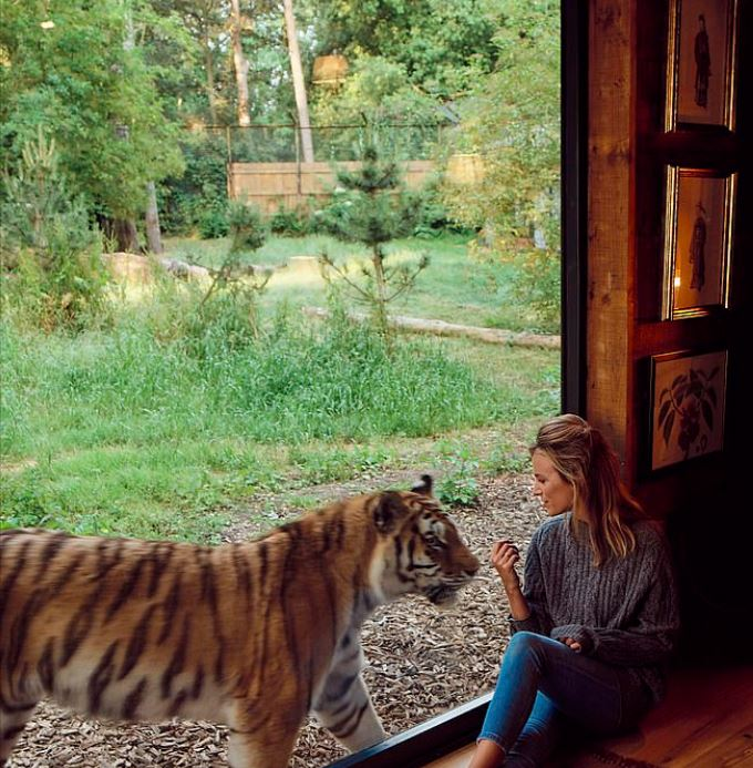 wake up with a tiger