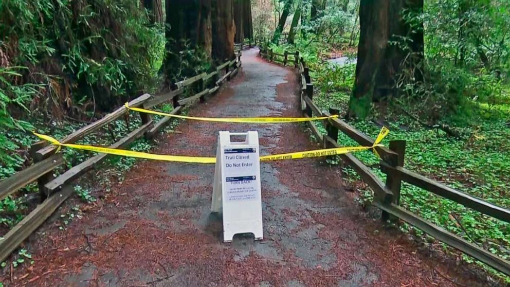 Hiker Killed By Giant Redwood Tree In Northern California