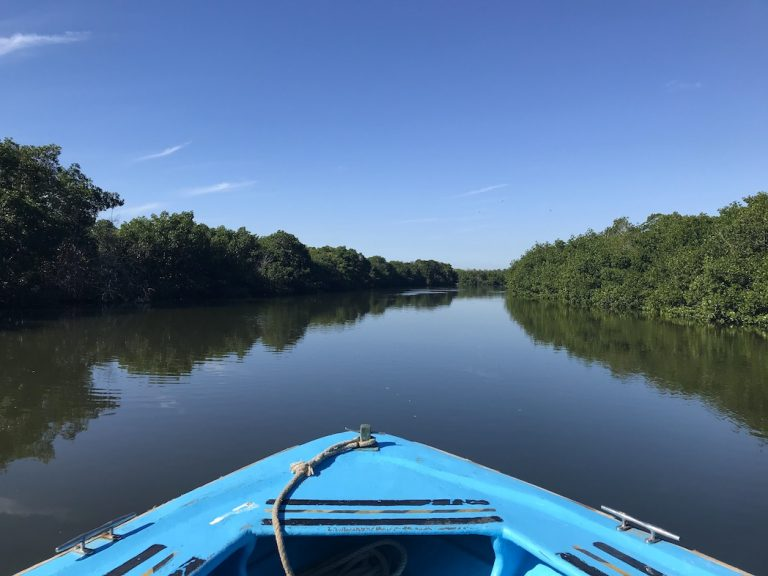 Mangroves - Mazatlán Jungle and Stone Island Tour Review