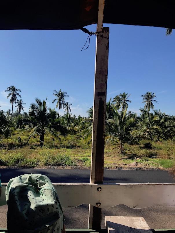 Tour through coconut plantation on King David jungle tour