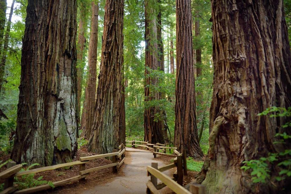 tree kills man in california