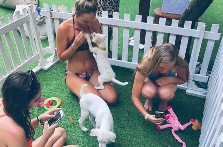 bali-hotel-puppies-and-yoga-759x500