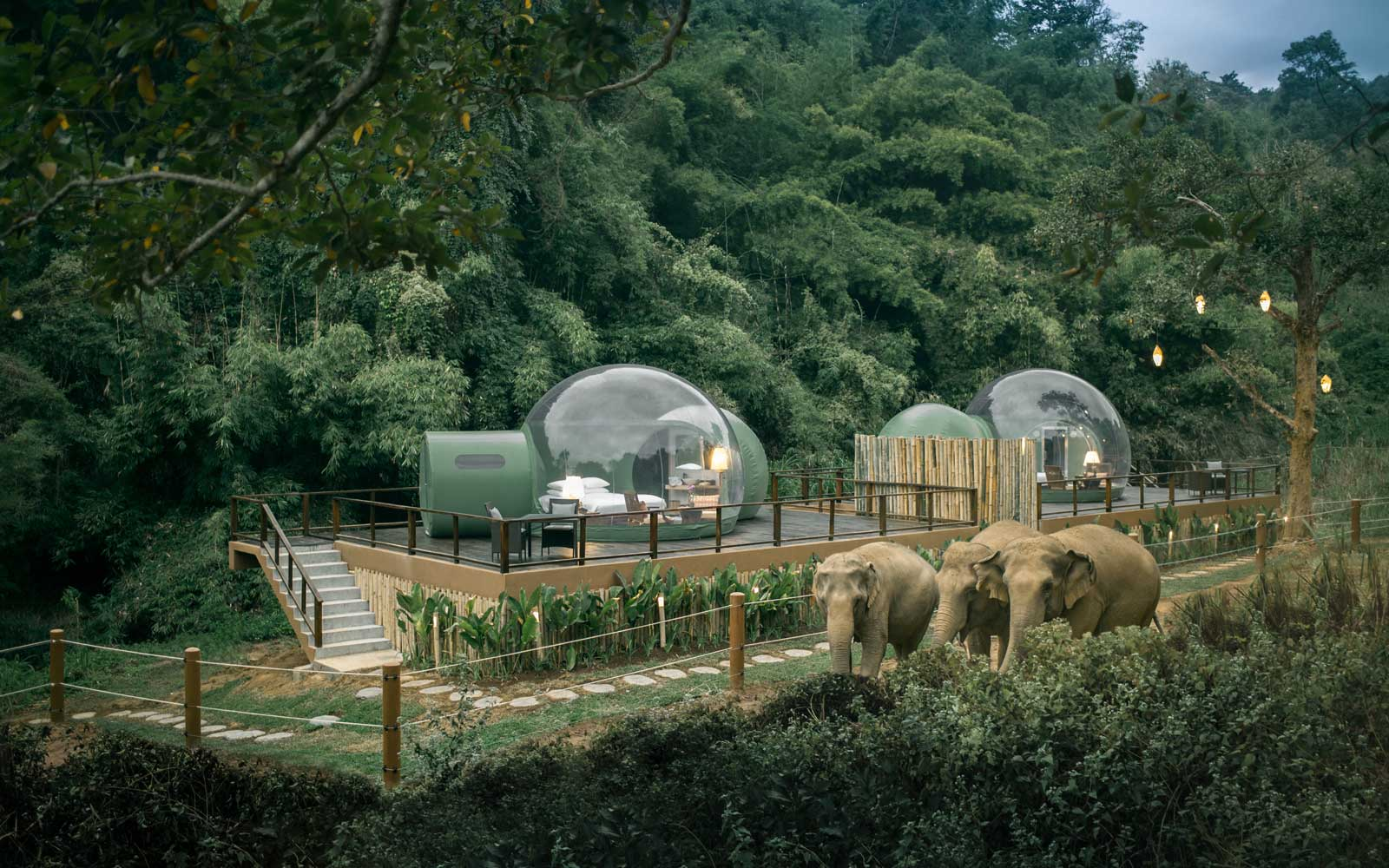 transparent luxury bubble suites, called Jungle Bubbles, which happen to be located in an area heavily trafficked by local elephants