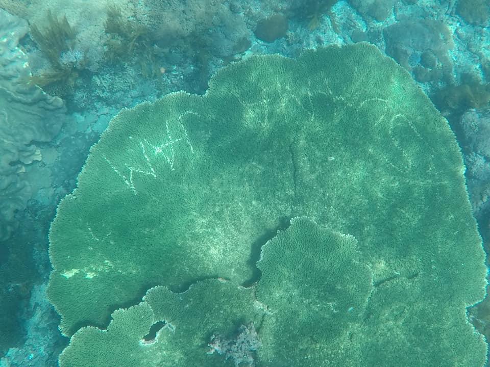 visitors-carve-names-into-coral3