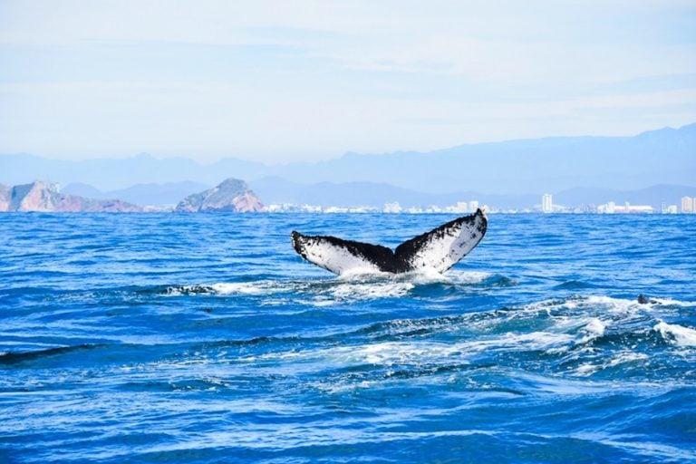 go whale watching on cruise port day in mazatlan