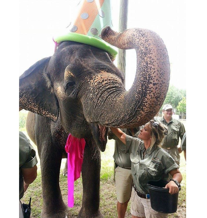 Elephant at party
