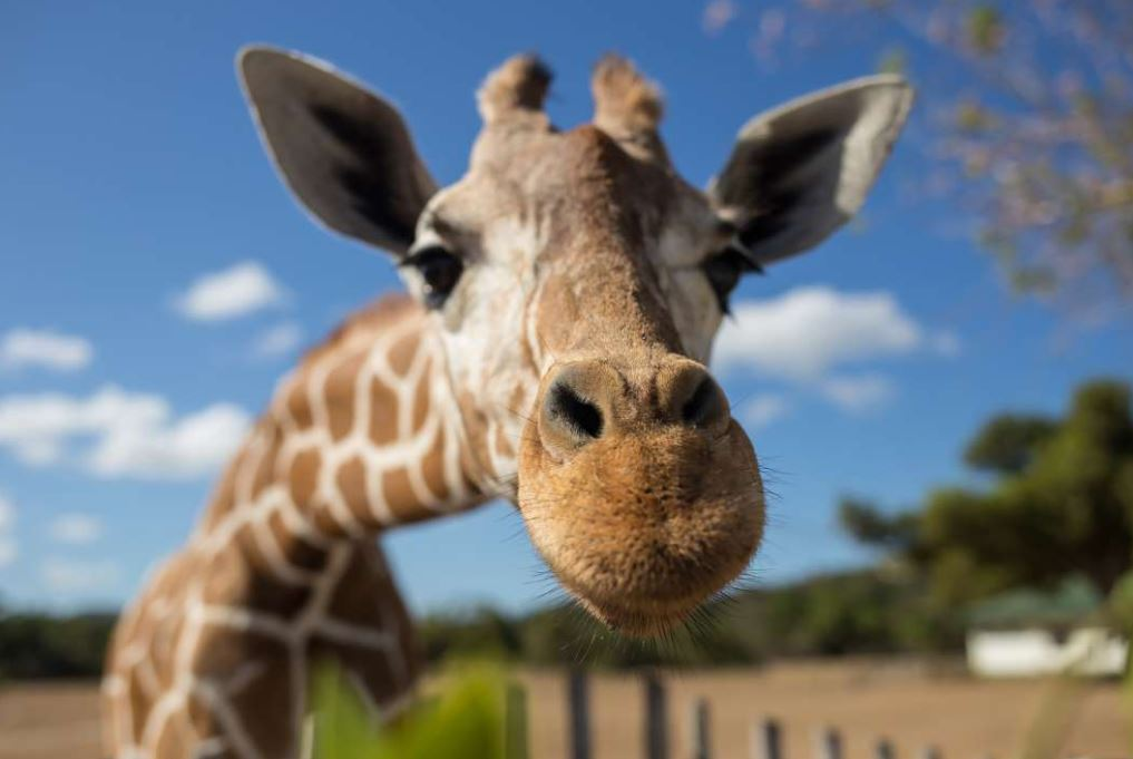 Los Angeles on Tuesday banned the exploitation of exotic animals for entertainment purposes