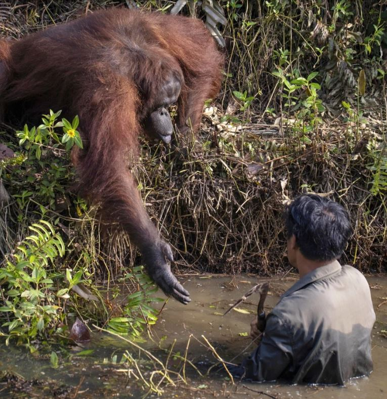 monkey gives man helping hand