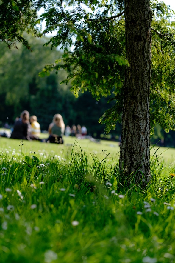 visit a local park - staycation ideas