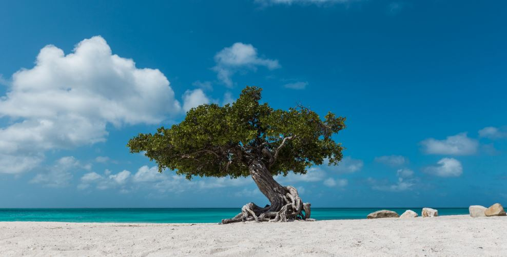Aruba Reopening To International Tourists Tentatively By July 1st