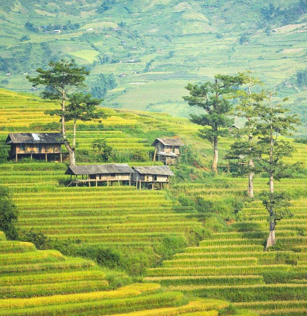 Bali-Traditional-house-in-rice-field