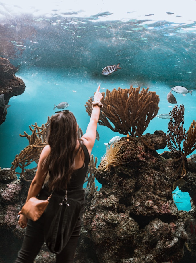 bermuda reopens to tourism