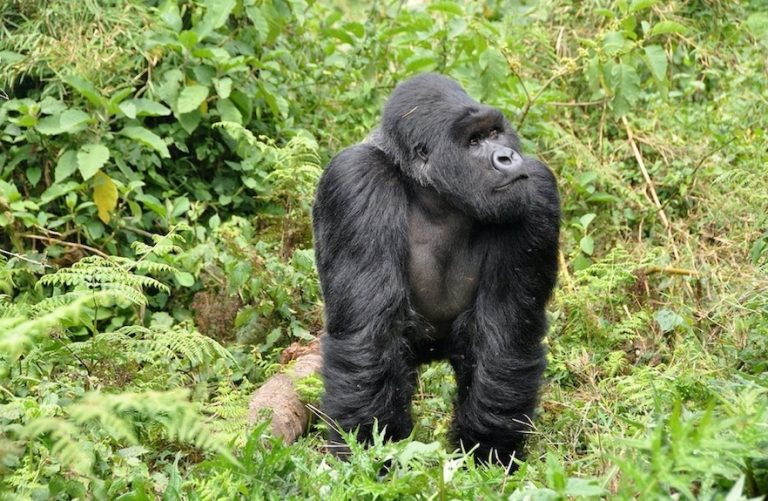 Rwanda Officially Reopens For Tourism – All Countries Welcome
