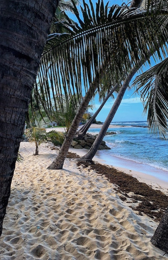 tourists can now visit barbados