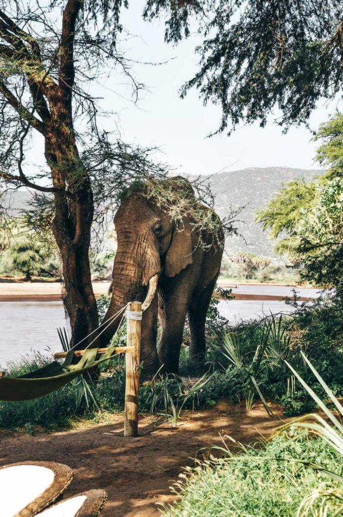 Elephants near river in kenya