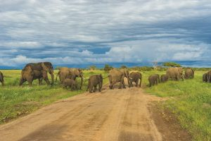 Africa Reopening For Tourism