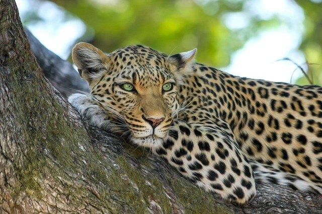 botswana reopening for tourism