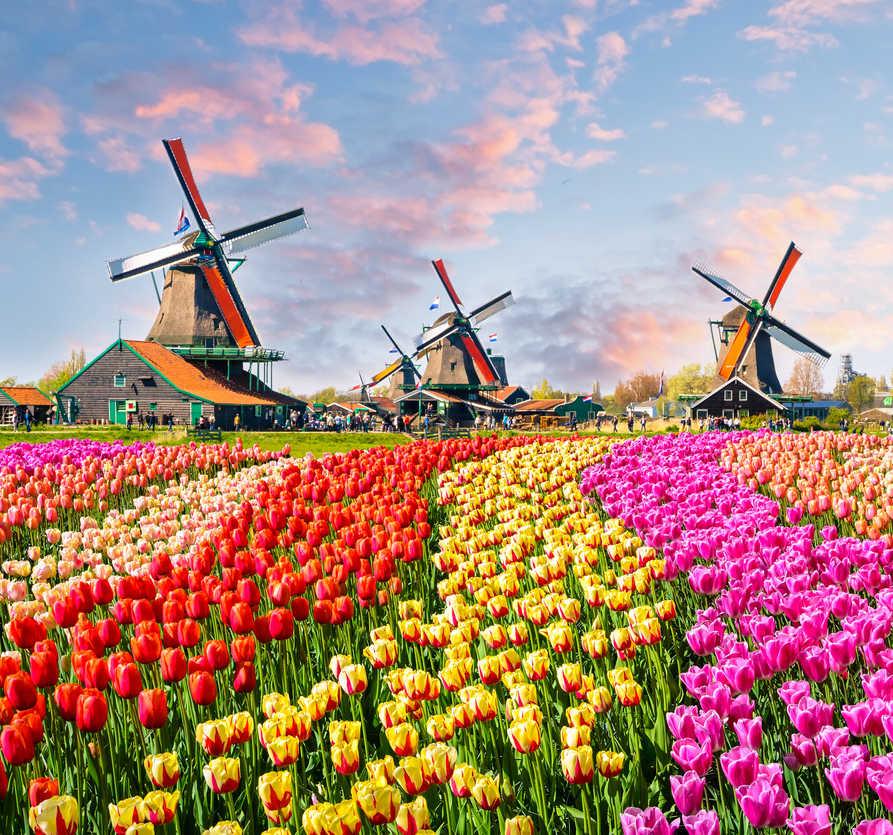 Traditional dutch windmills and houses near the canal in Zaanstad village, Zaanse Schans, Netherlands