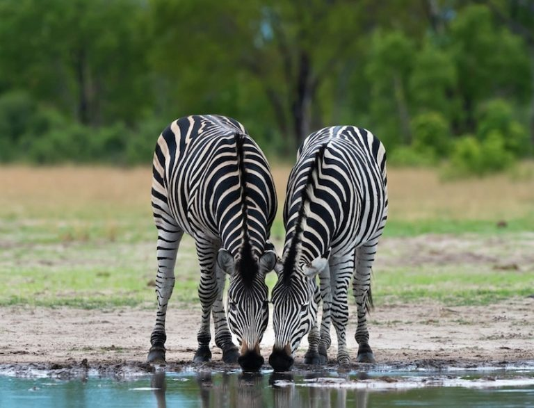 Hwange National Park reopens for tourism in Zimbabwe