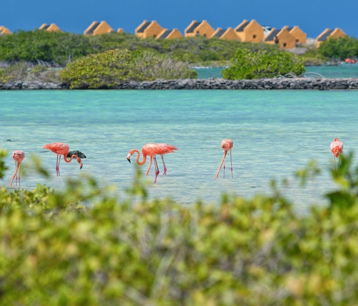 bonaire flamingos tourism