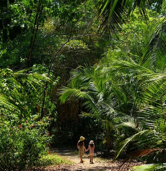 jungle costa rica