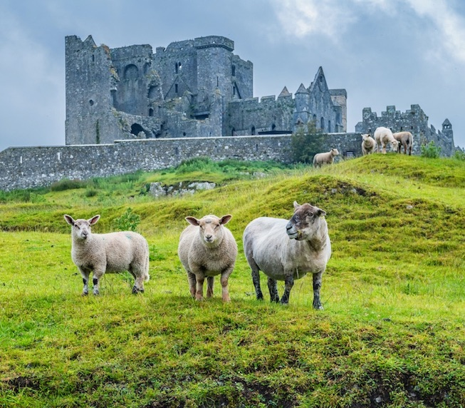countries that can visit ireland