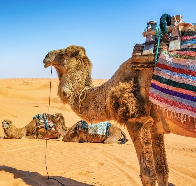 tunisia camel rides
