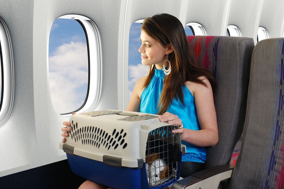 US Airlines Crack Down on Travelers Bringing Pets on Board for Emotional Support
