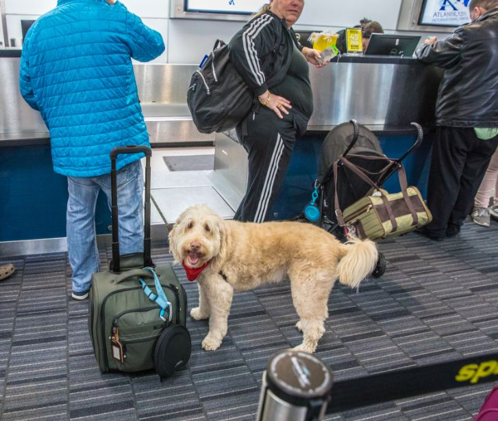 dog at checkin desk airport