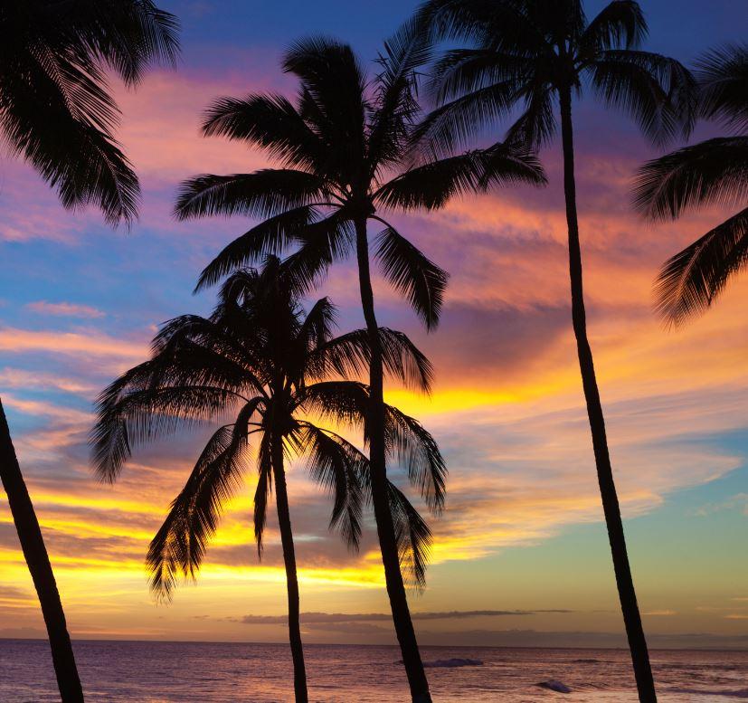palm trees on the beach at Kauai