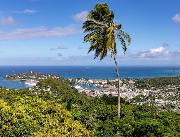 saint lucia palm tree