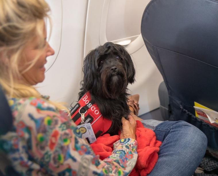 traveler on plane with pet dog