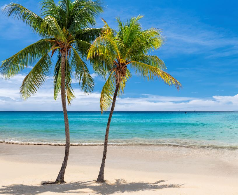 palm trees on a Jamaican beach