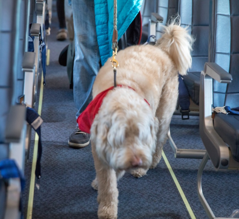 service dog on American plane