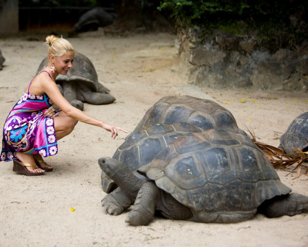 woman with giant turtle in Secyehlles