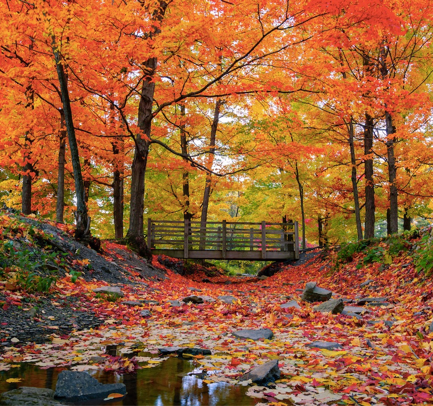 fall leaves new york