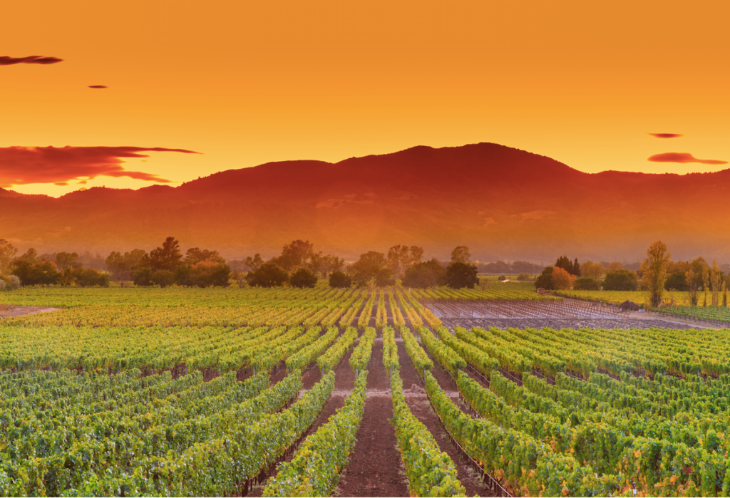 napa valley california vineyard sunset