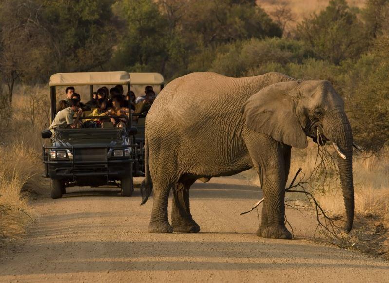 elephant safari south africa